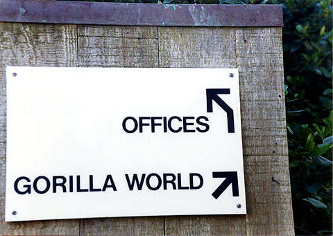 Gorilla_world